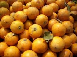 AFRICAN STAR APPLE LEAVES cure cancer 1