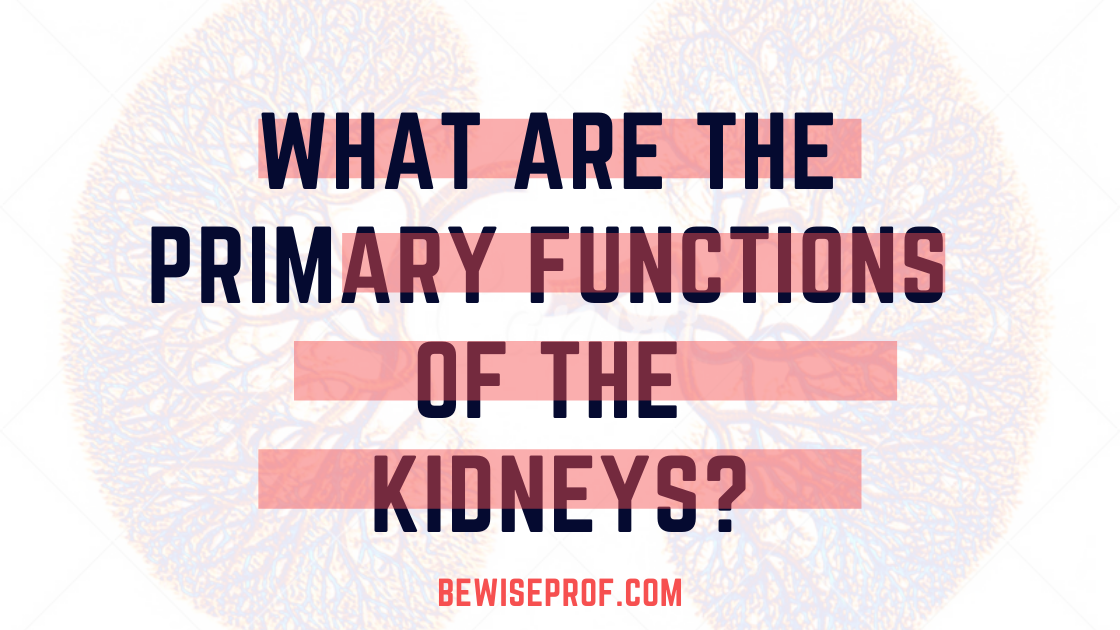 Photo of What Are the Primary Functions of the Kidneys?
